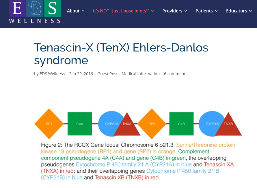 Medical article about the gene Tenascin-XB